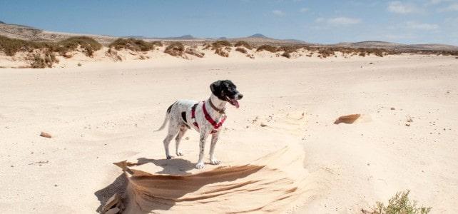 A walk in the dry river beds, Lajares, Fuerteventura