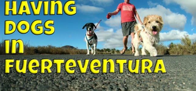 Having Dogs In Fuerteventura