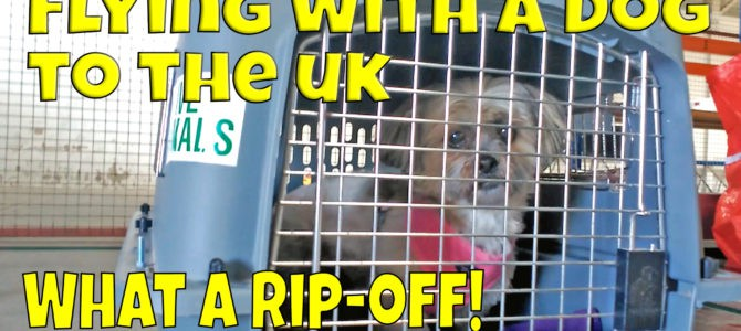 Flying With A Dog To The UK – What does it cost?